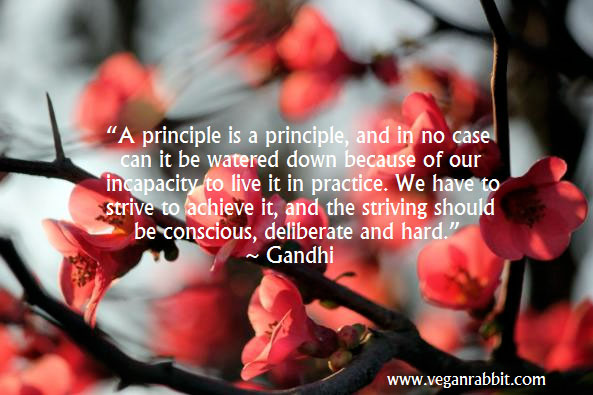 flowers mahatma mohandas gandhi quote a principle is a principle and in no case can it be watered down