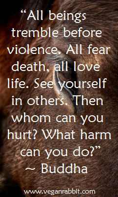 Quotes About Veganism Activism And Animal Rights Vegan Rabbit