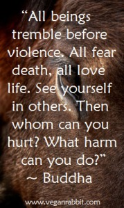 horse buddha quote all being tremble before violence all fear death all love life see yourself in others then whom can you hurt what harm can you do