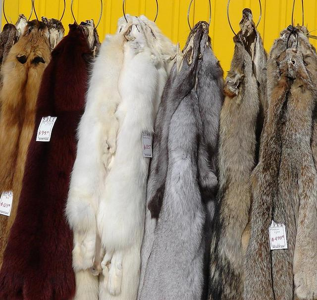 fur coats for sale, cruel, fox, mink, dog, cat, rabbit, chinchilla, greed, vanity