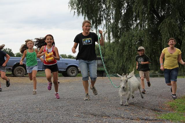 kids running with rescue goat at animal sanctuary