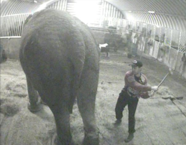 circus elephant cruelty, beating, bull hook, Bobby Robert Super Circus