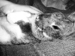 Epitaph to My Best Friend, A Rabbit