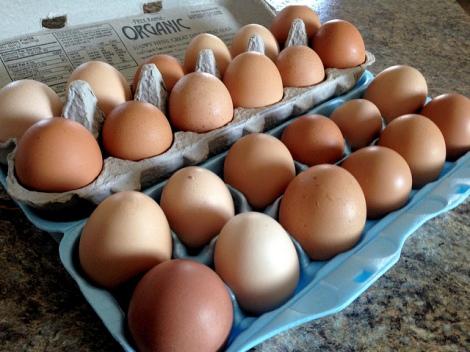free range, humane, local, organic, eggs