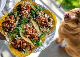 boca, tacos, vegan, vegan tacos, dog, pitt bull, adopt, mexican food